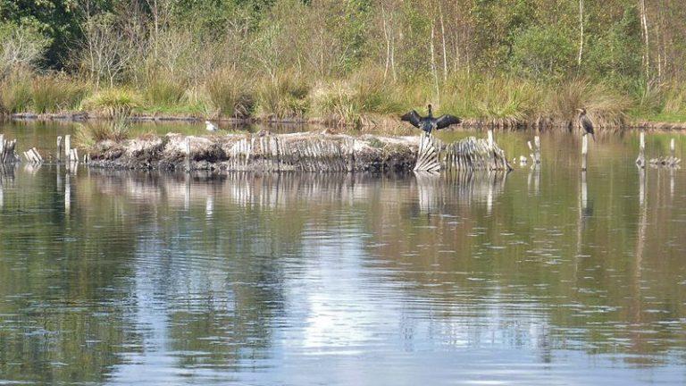 Le Marais de Mousterlin